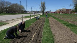 Planting First Crops
